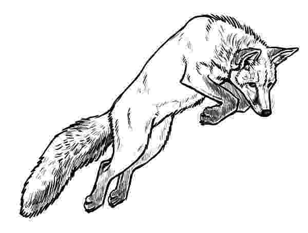 red fox coloring page free adult coloring page of the 39red fox vines39 from the page coloring red fox