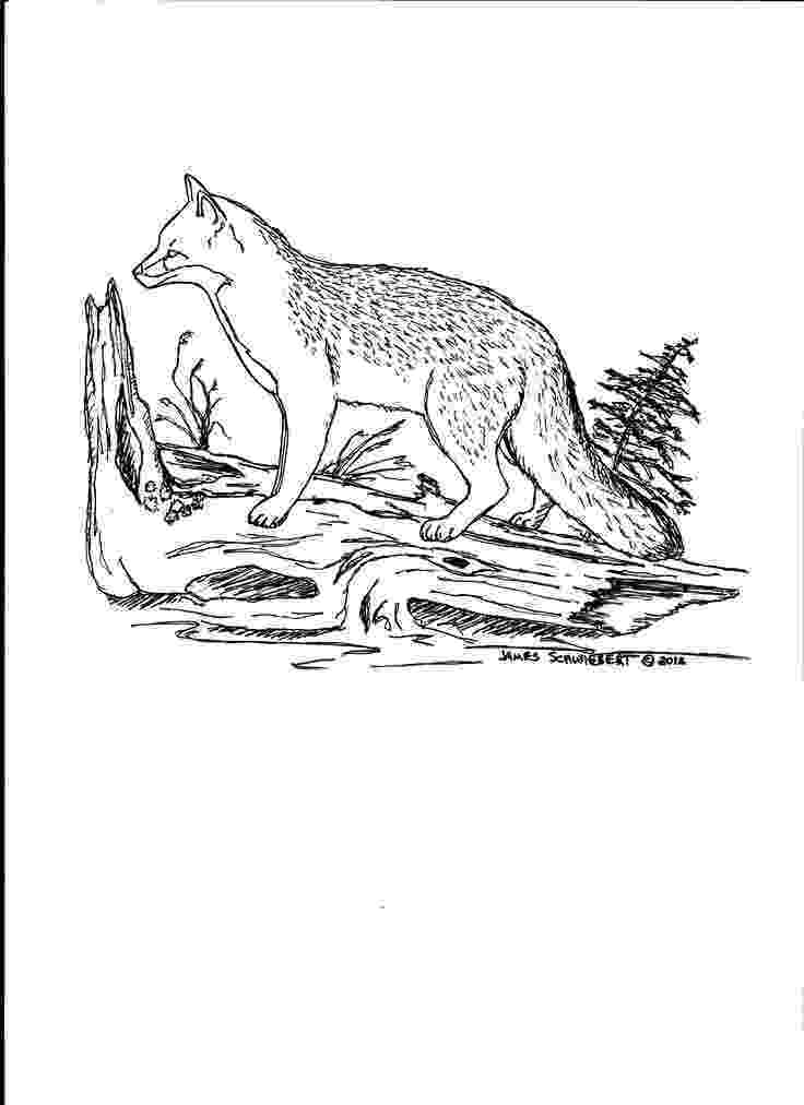 red fox coloring page free printable fox coloring pages for kids page fox red coloring
