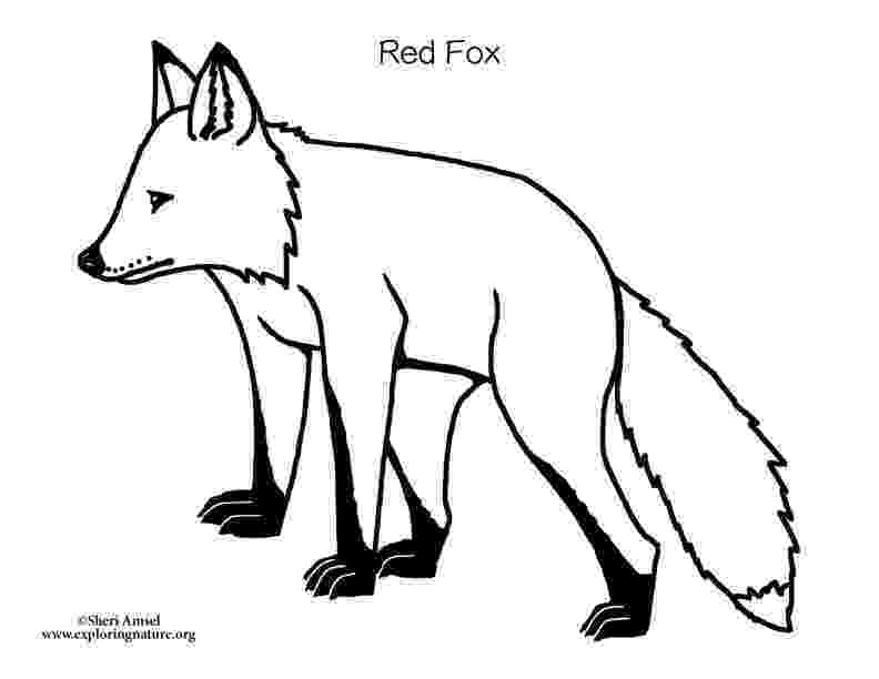 red fox coloring page free printable fox coloring pages for kids page red fox coloring
