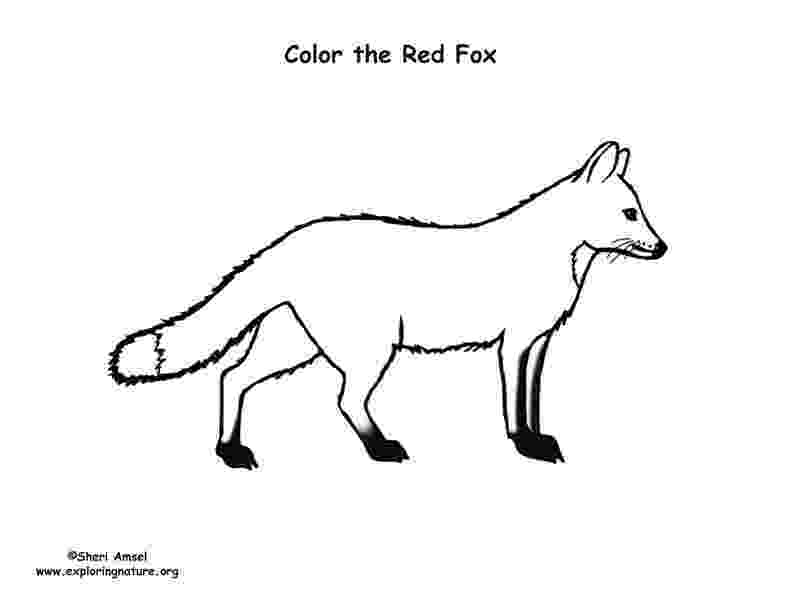 red fox coloring page red fox growl coloring page free printable coloring pages fox red coloring page