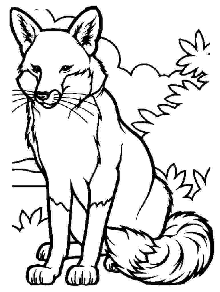 red fox coloring page the red fox coloring page free fox coloring pages red page fox coloring