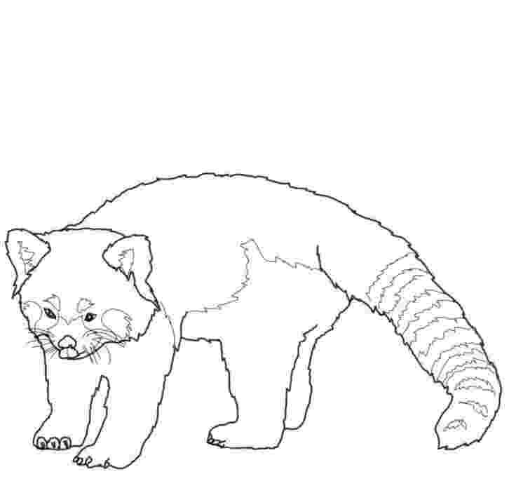 red panda coloring pages cute red panda coloring coloring pages panda pages red coloring