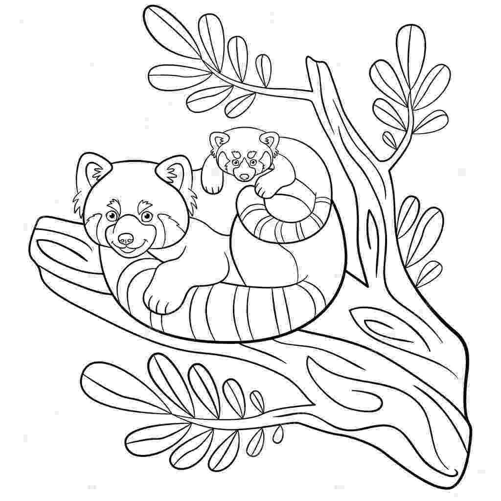 red panda coloring pages cute red panda coloring pages red panda coloring pages