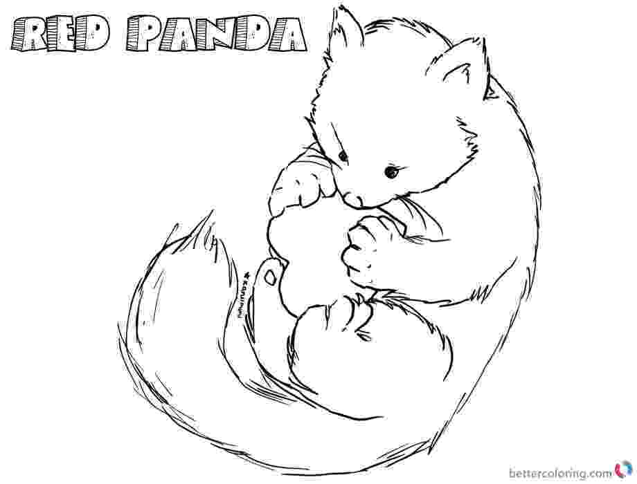 red panda coloring pages red panda drawing at getdrawingscom free for personal coloring red panda pages