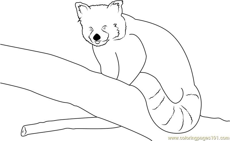 red panda coloring pages red panda having fun coloring page free red panda red coloring panda pages