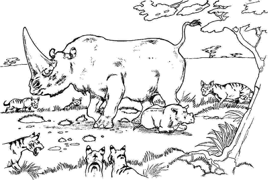 rhino pictures to print framed rhino print by lale guralp notonthehighstreetcom rhino pictures to print