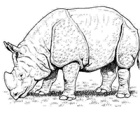 rhino pictures to print rhino coloring page art starts for kids pictures print to rhino