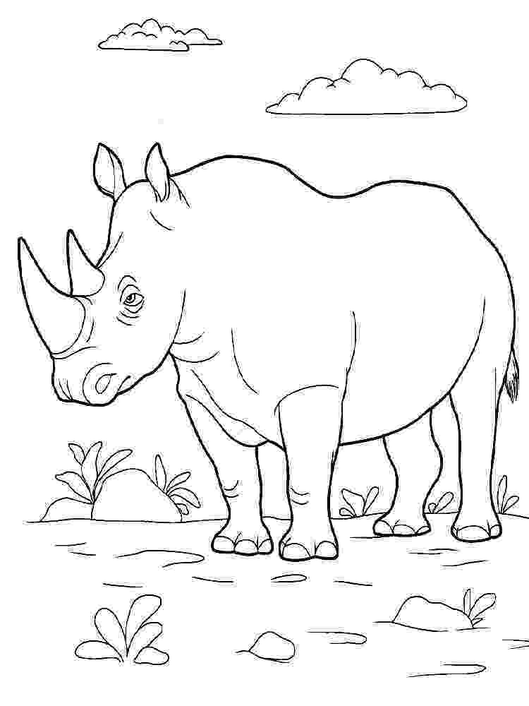 rhino pictures to print rhinoceros coloring pages kidsuki to pictures print rhino