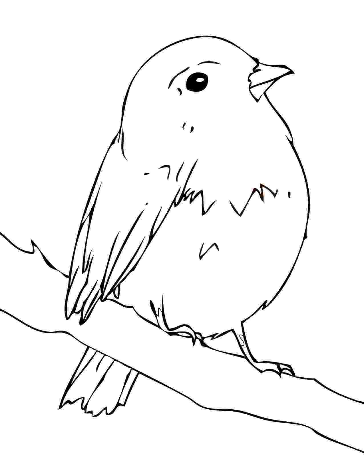 robin colouring robin eating worm coloring page kids play color colouring robin