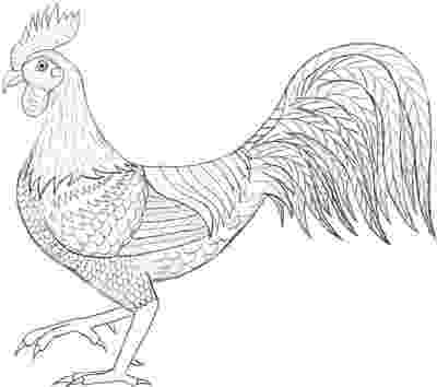 rooster sketch 429 best images about drawings on pinterest dovers sketch rooster