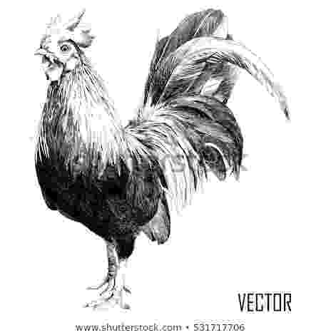 rooster sketch free rooster clip art the graphics fairy sketch rooster