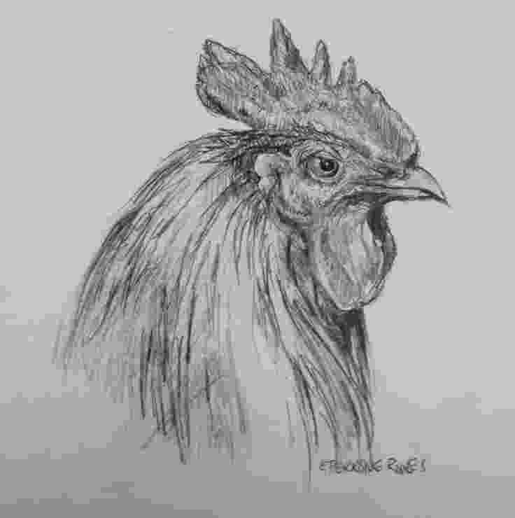 rooster sketch rooster drawing original sketch art farm birds country sketch rooster