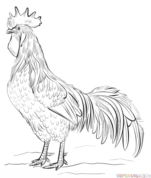 rooster sketch rooster stock images royalty free images vectors rooster sketch