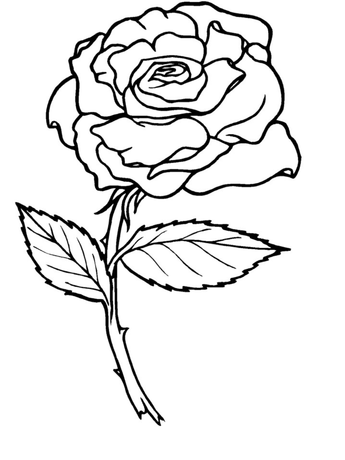 rose coloring sheets rose coloring page free printable coloring pages coloring sheets rose