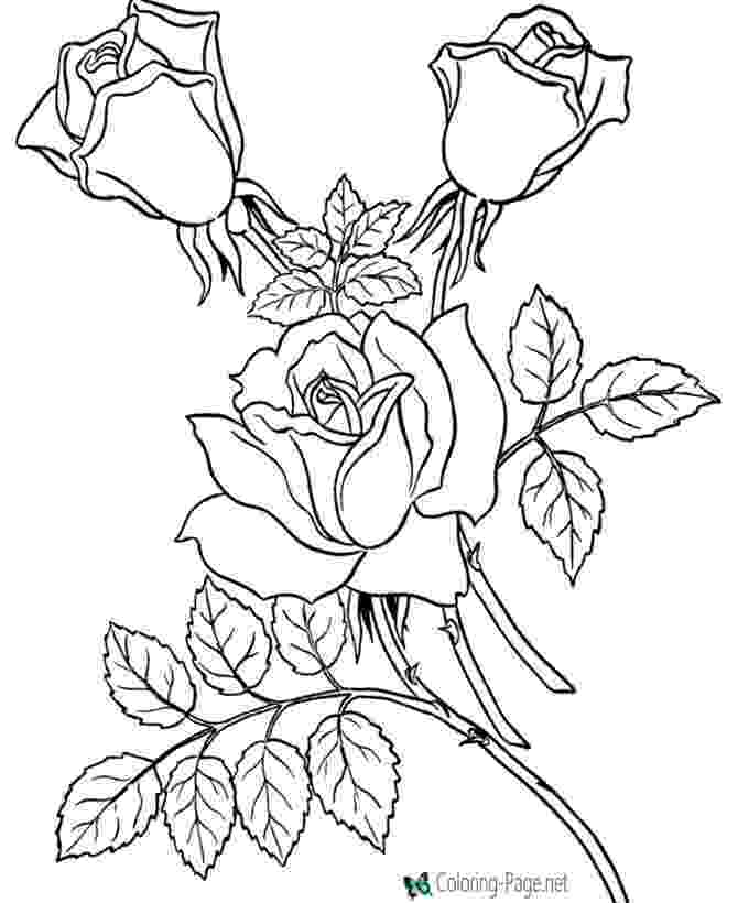 rose flower coloring pages flower page printable coloring sheets page flowers rose pages flower coloring