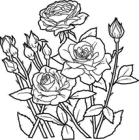 rose flower coloring pages printable rose coloring pages for everyone rose coloring rose pages flower coloring