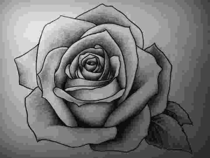 rose pictures to trace black and white drawings of roses black and red roses to pictures trace rose