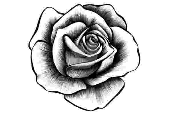 rose pictures to trace free rose flowers drawing download free clip art free rose pictures to trace