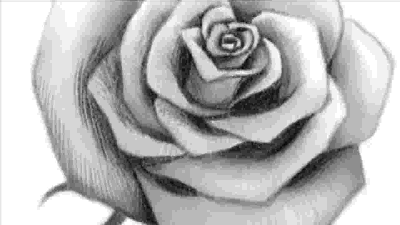 rose pictures to trace how to draw a rose easy drawingforallnet to trace pictures rose