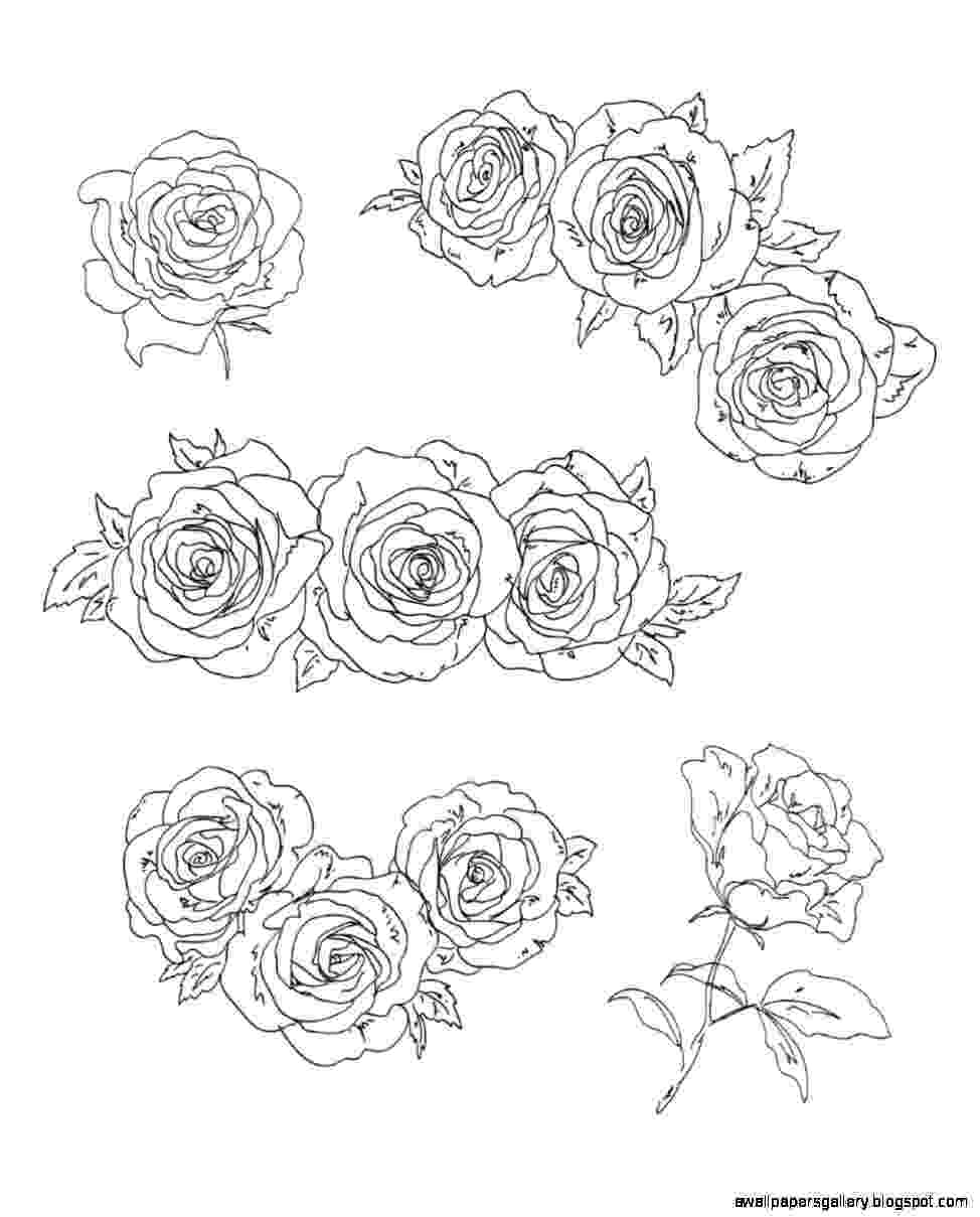 rose pictures to trace how to draw a rose for beginners drawingforallnet rose trace pictures to