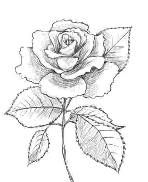 rose pictures to trace rose and heart drawing printable coloring of valentine to pictures trace rose