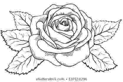 rose pictures to trace rose outline images stock photos vectors shutterstock to trace rose pictures