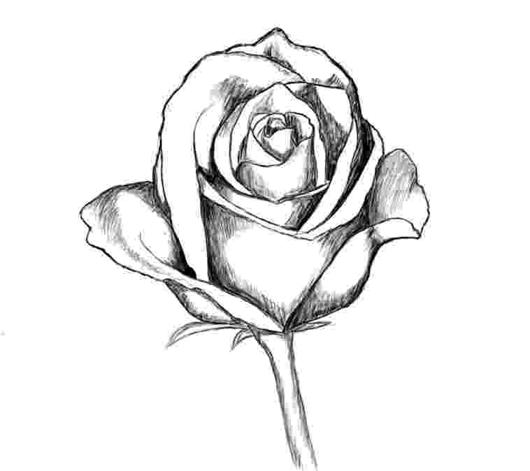 rose pictures to trace rose pictures to trace impremedianet to trace rose pictures