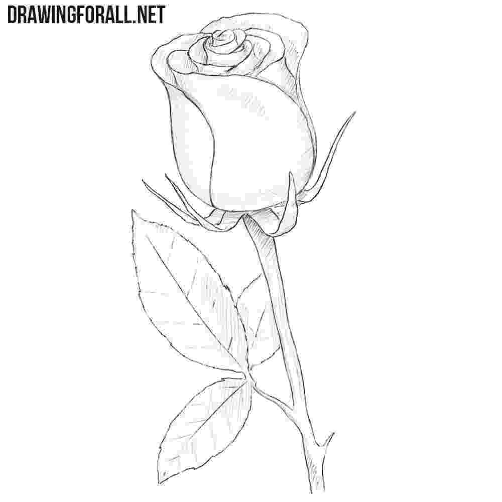 rose pictures to trace rose pictures to trace impremedianet trace pictures to rose