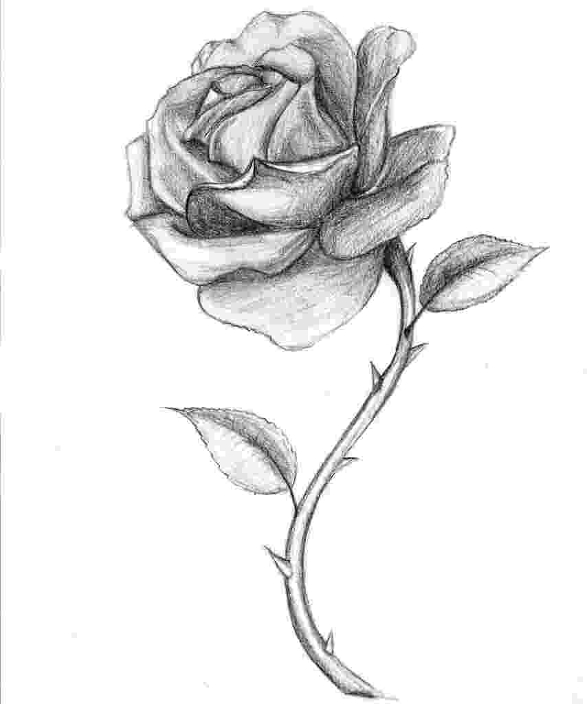 rose pictures to trace roses drawings simple rose drawing roses drawing rose rose to trace pictures