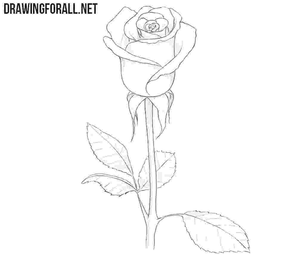 rose pictures to trace traditional roses sketched in pencil crayon outlined in to trace rose pictures