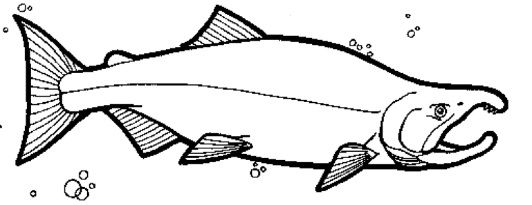 salmon pictures to color color the sockeye salmon salmon pictures color to