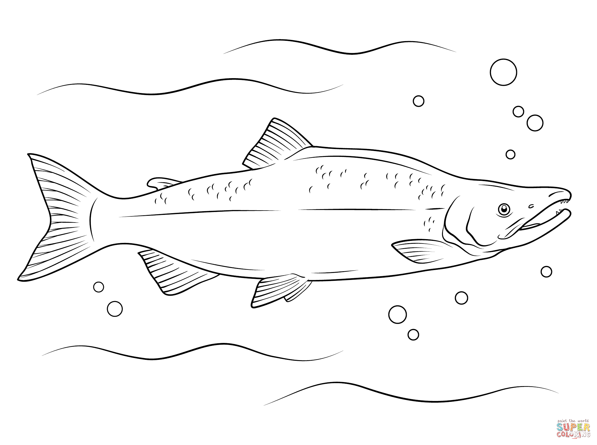 salmon pictures to color pacific salmon coloring pages download and print for free color pictures salmon to
