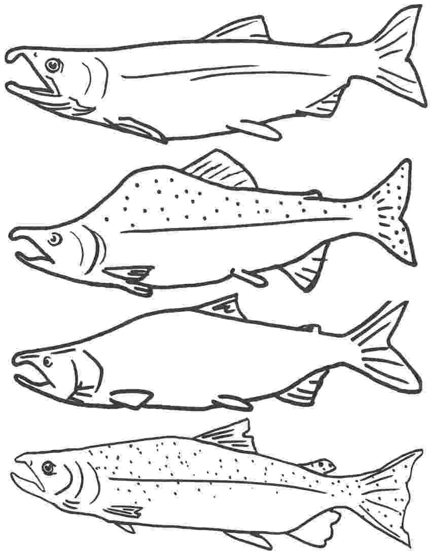 salmon pictures to color pacific salmon coloring pages download and print for free color salmon pictures to