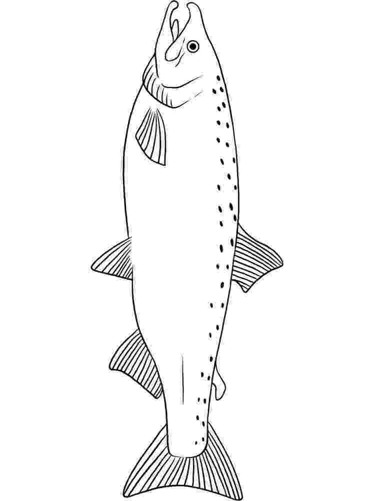 salmon pictures to color pacific salmon coloring pages download and print for free pictures color to salmon