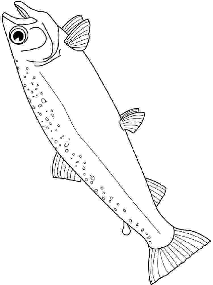 salmon pictures to color salmon coloring pages download and print salmon coloring salmon pictures color to