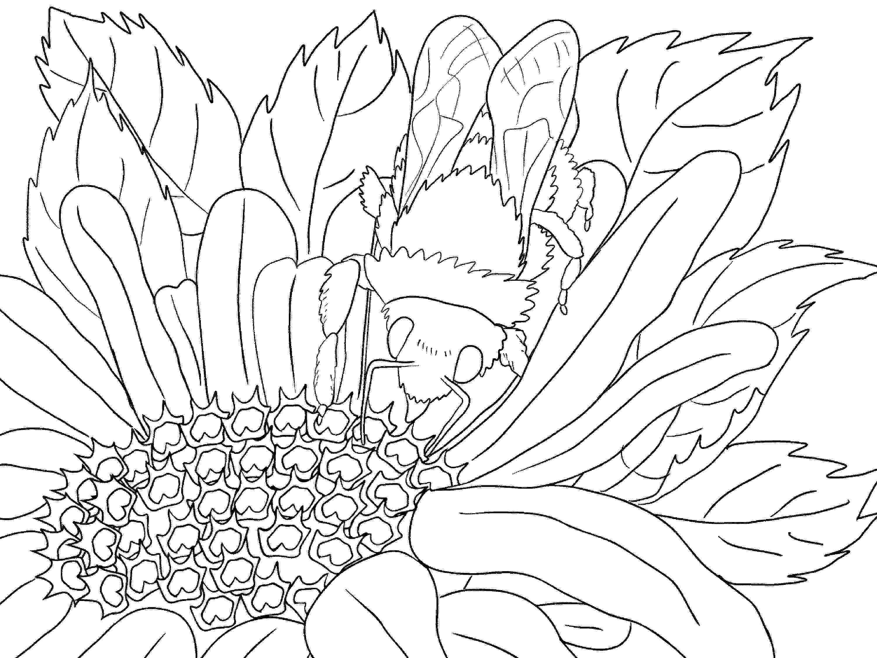 sceneries pictures for colouring printable scenery coloring pages art drawings for kids pictures colouring sceneries for
