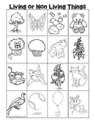 science worksheets for grade 1 living and nonliving things living or non living science cut and paste sorting grade and worksheets science nonliving living 1 things for