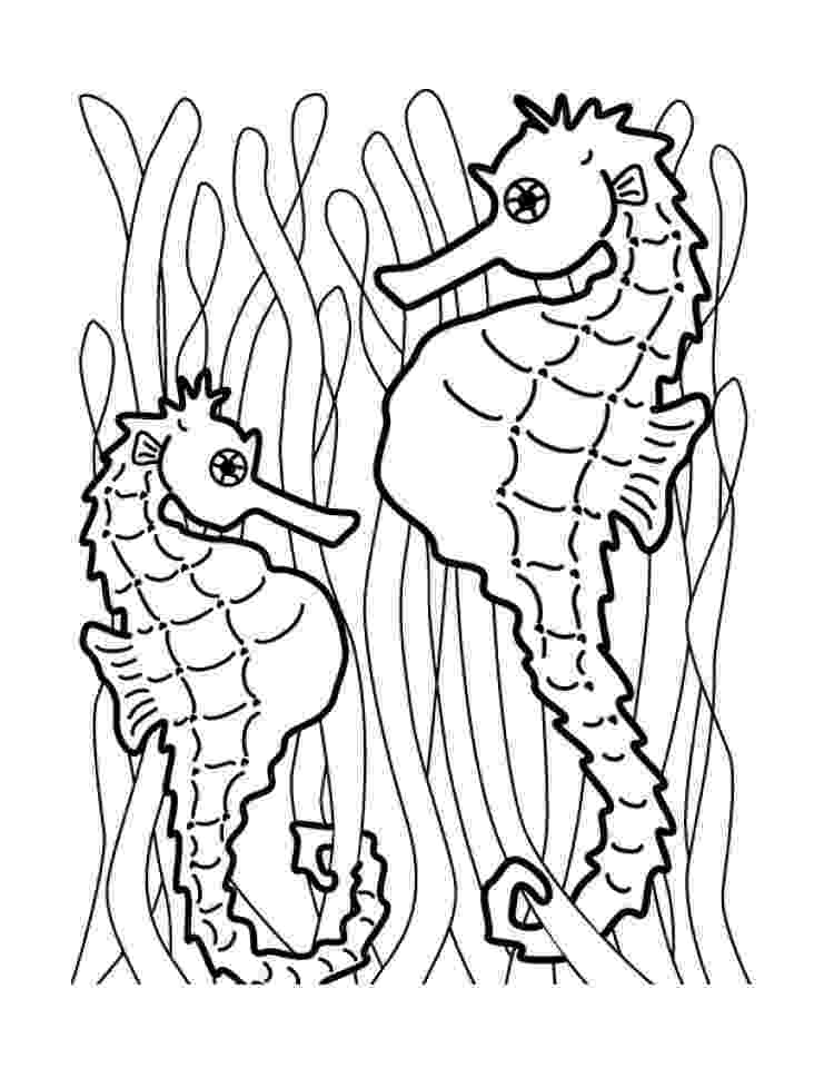 sea horse coloring pages free printable seahorse coloring pages for kids horse pages coloring sea
