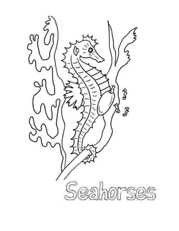 sea horse coloring pages free printable seahorse coloring pages for kids sea coloring pages horse