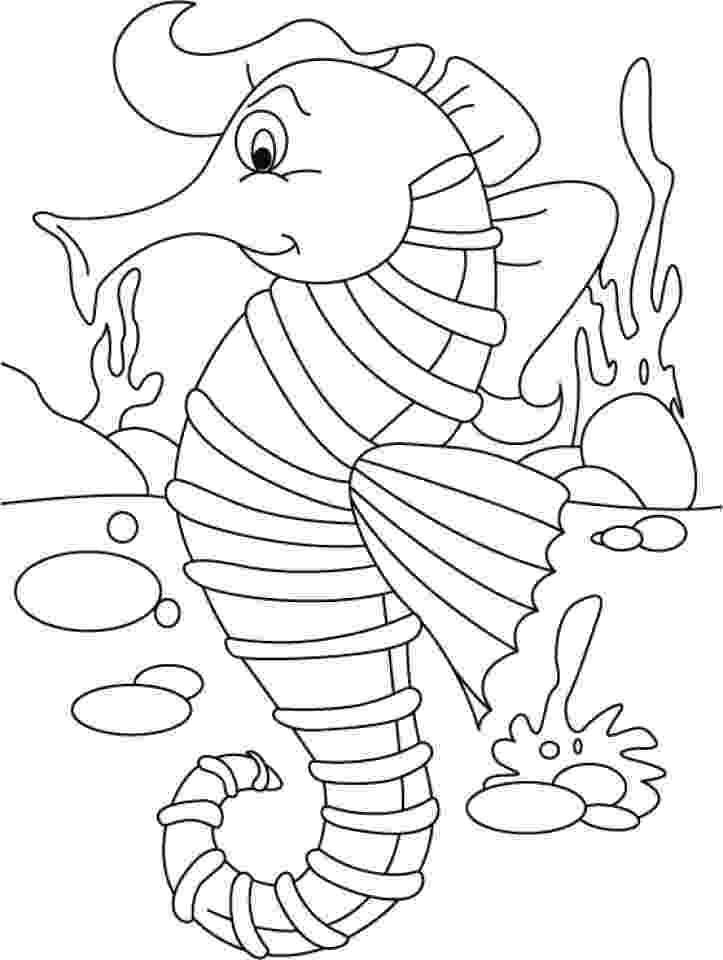 sea horse coloring pages seahorse coloring pages 360coloringpages sea coloring pages horse