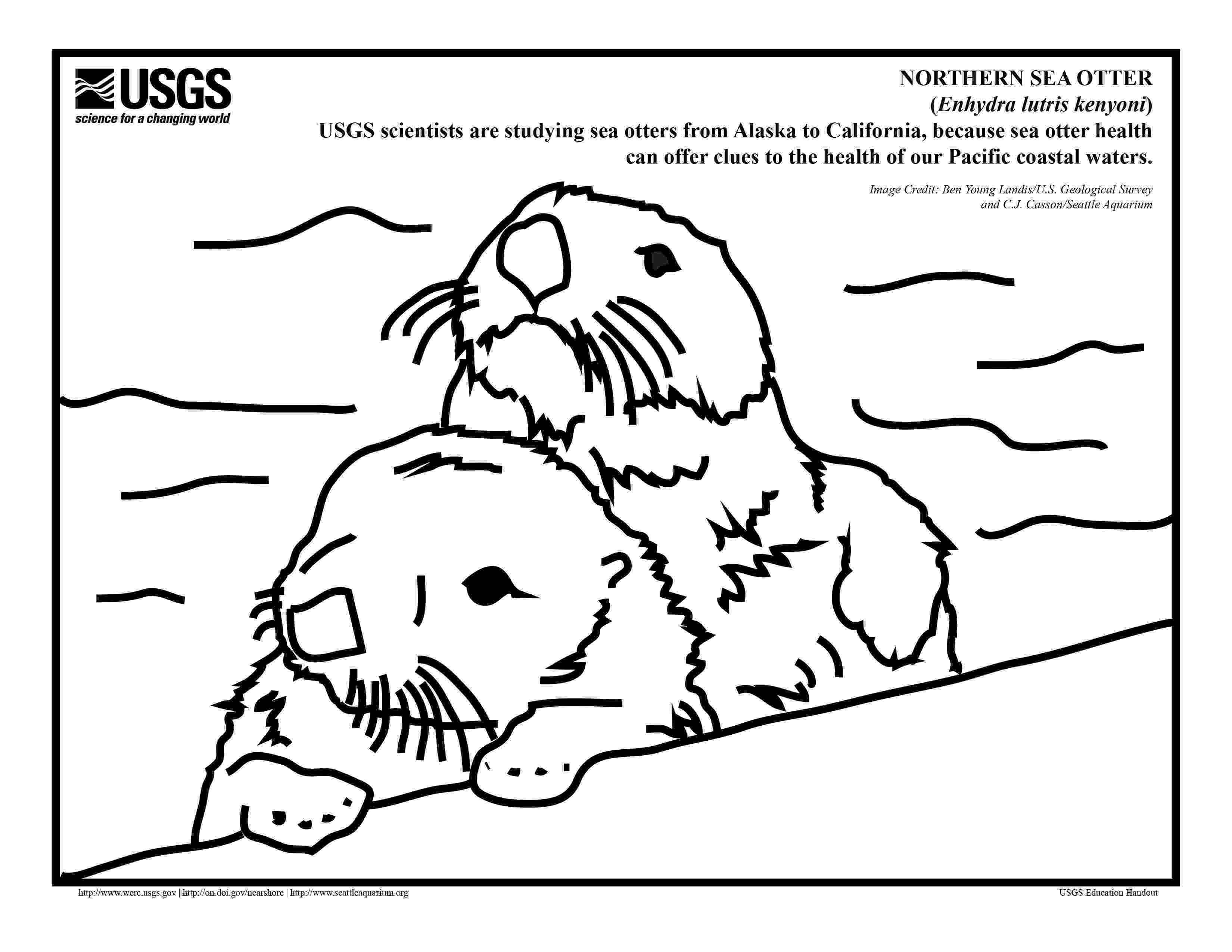 sea otter coloring pages free otter coloring pages pages otter sea coloring