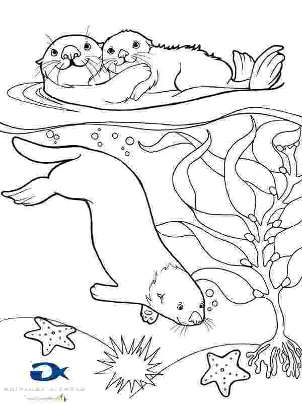 sea otter coloring pages free otter coloring pages sea pages coloring otter