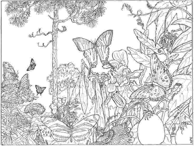 secret garden coloring book animals inspirational coloring pages from secret garden enchanted book coloring secret animals garden