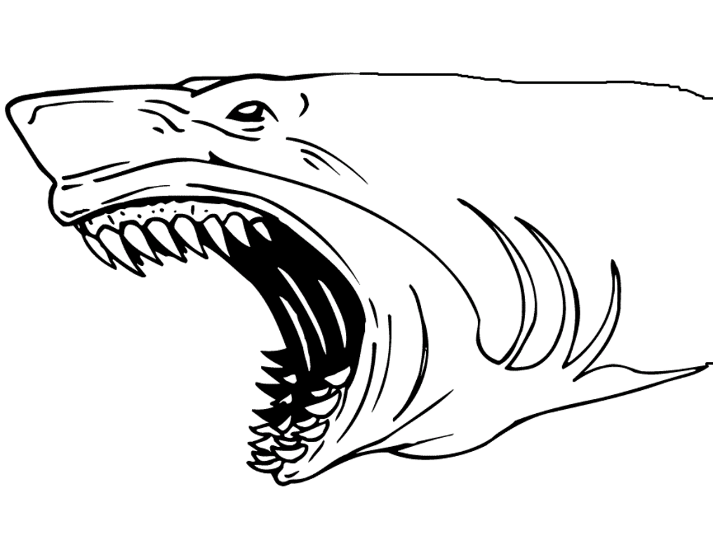 shark picture to color 33 free shark coloring pages printable to shark picture color