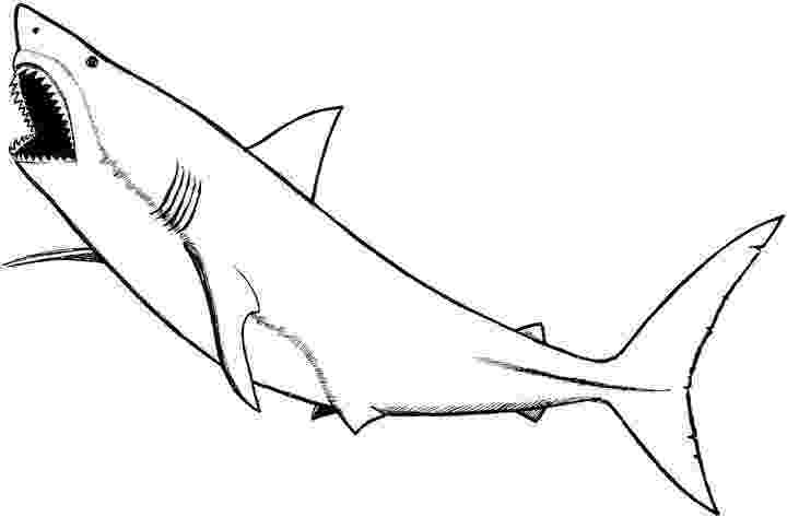 shark picture to color cute cartoon shark coloring page shark coloring pages color to shark picture