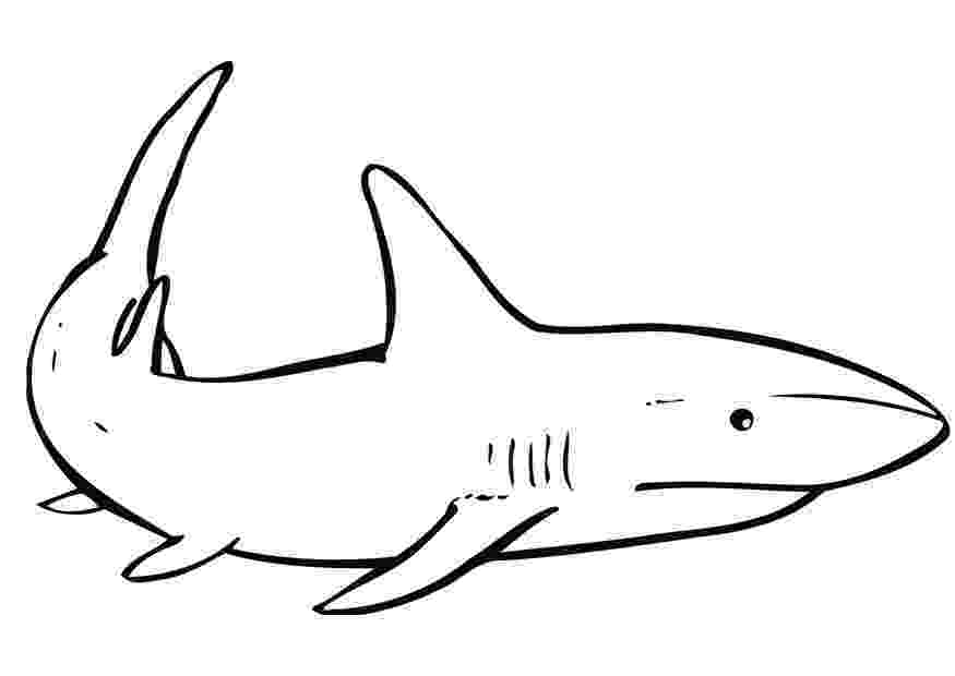 shark picture to color free shark coloring pages picture color shark to