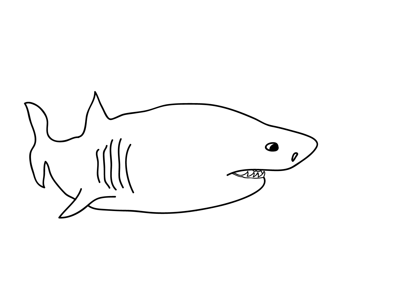 shark picture to color shark coloring pages 12 coloring kids shark coloring color to shark picture