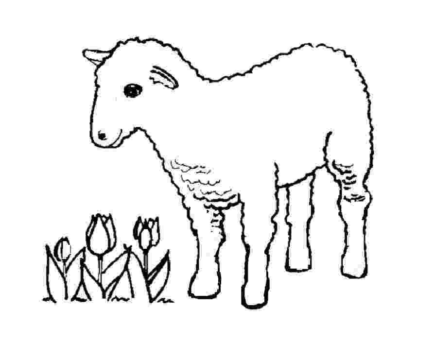sheep coloring sheet sheep coloring pages to print year of sheep 2015 coloring sheet sheep