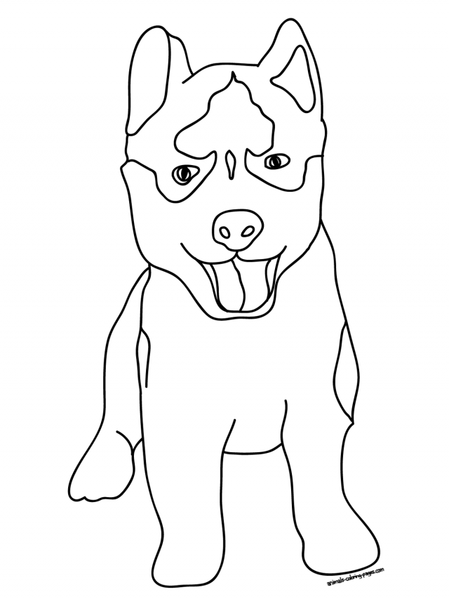 siberian husky coloring pages items similar to siberian husky dog coloring page download coloring pages siberian husky