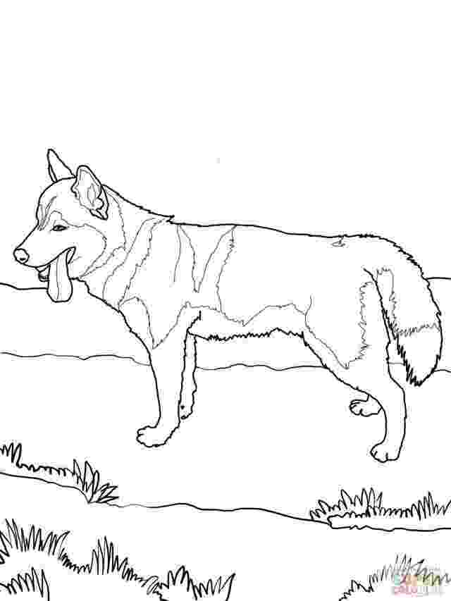 siberian husky coloring pages siberian husky coloring page hd wallpaper id 58737 siberian coloring husky pages